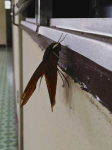 Bugs at the ashram