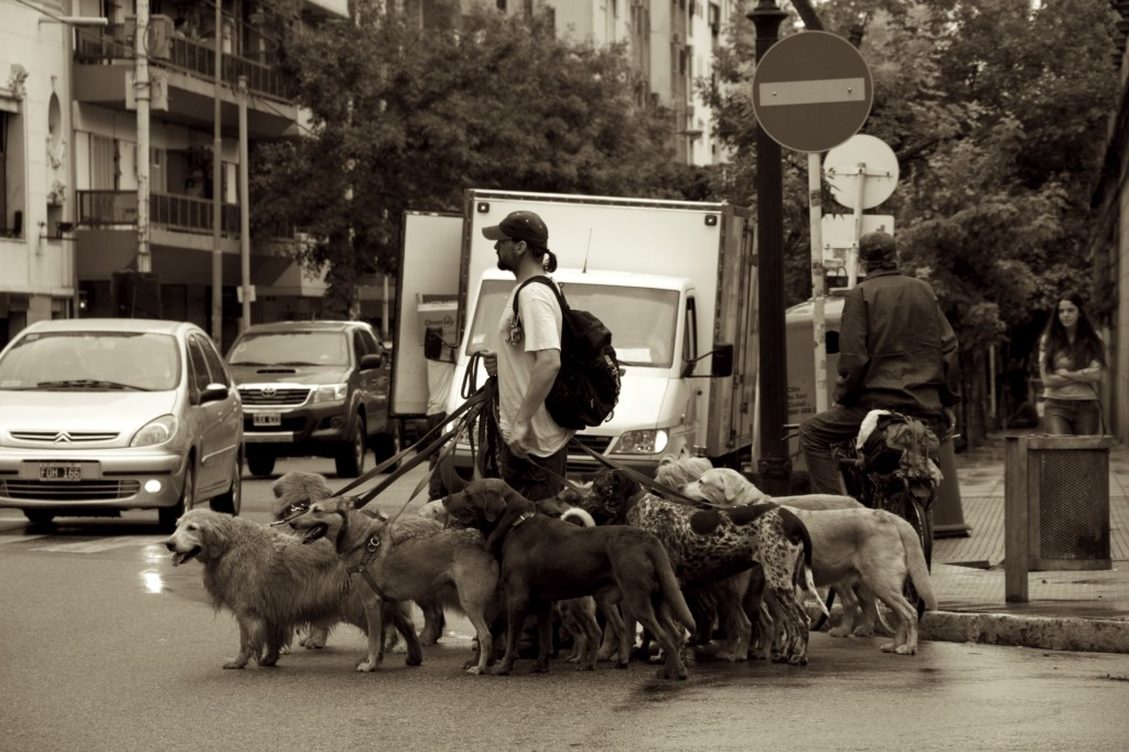 I've never seen these many dogs with a dog walker---not even in NYC